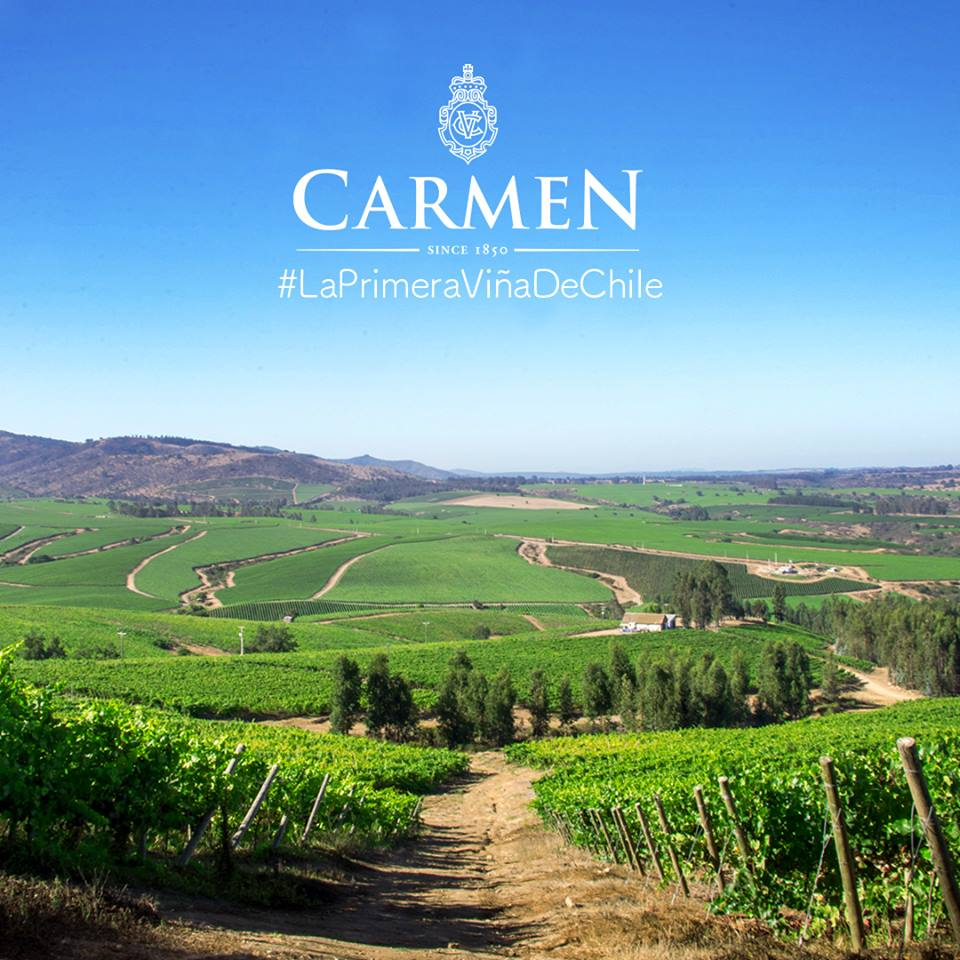 Carmmen vineyard